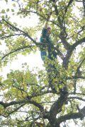 Mitmacherin_auf_dem_Apfelbaum