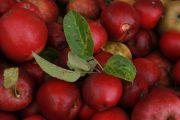Apfelrot