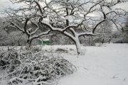 Obstbaumschnittwerk_in_Schnee_gehuellt